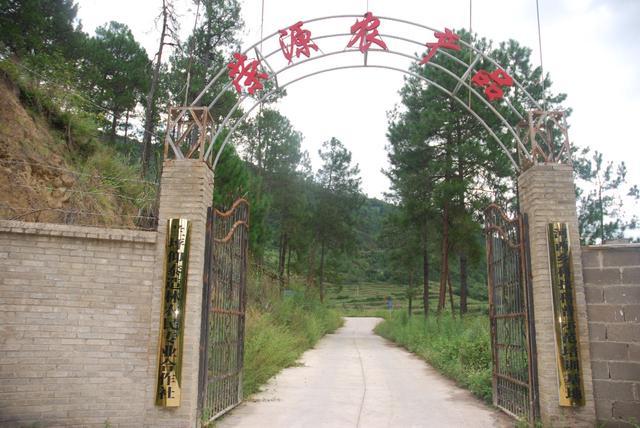 兰坪县:壮大林产业,走生态富民新路子