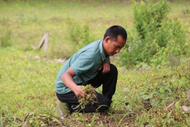 丙中洛:发展多样农业类型 拓宽群众增收渠道
