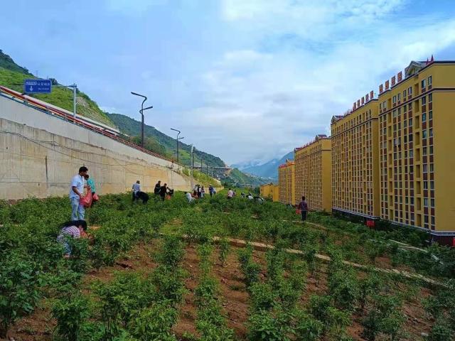 """上江镇和谐社区空闲地变""""微菜园"""""""